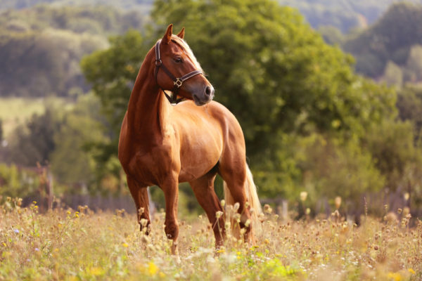 Equine Studies