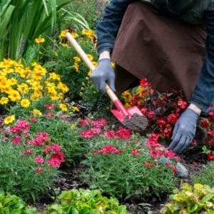 Try Horticulture for a Day with WIT